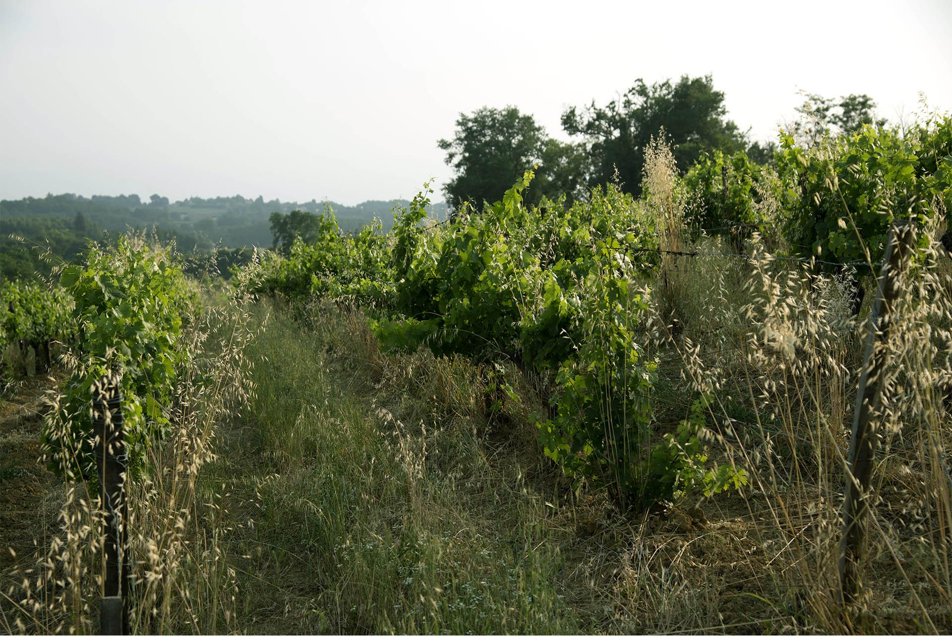 hubert-vignerons_0020__DSC1158